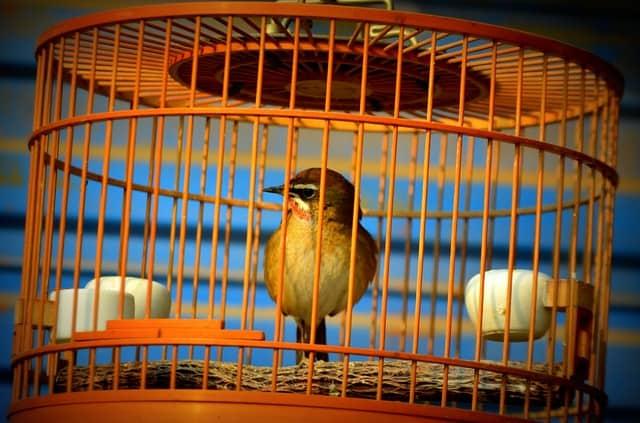 птица в клетка