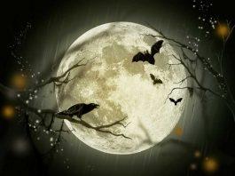 сладки сънища