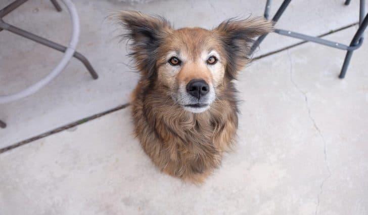 кучешка глава